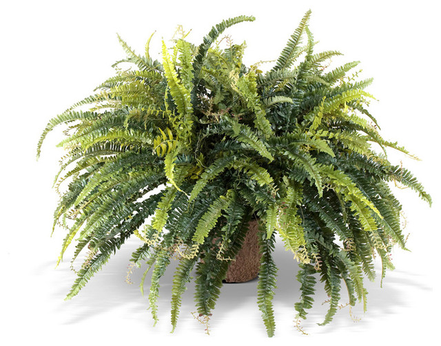 lush fern plant - traditional - artificial plants and trees -new