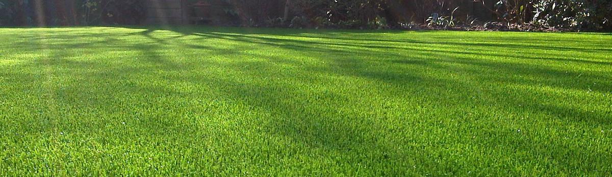 - Real Tree Landscapes, LLC - Fayetteville, NC, US 28306