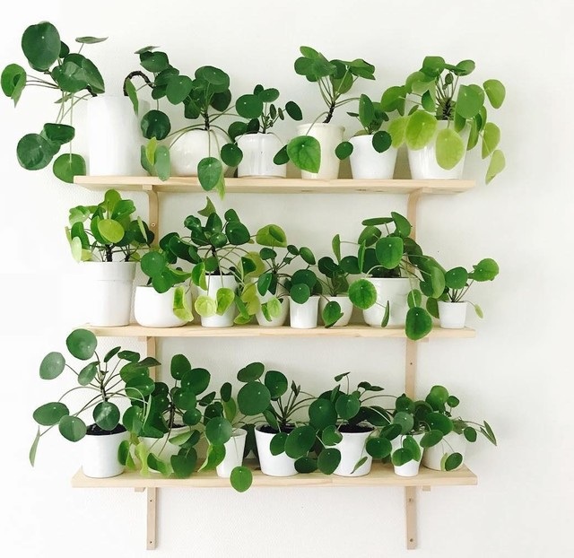 How To Choose The Best Houseplants And Style Them Beautifully Houzz Uk