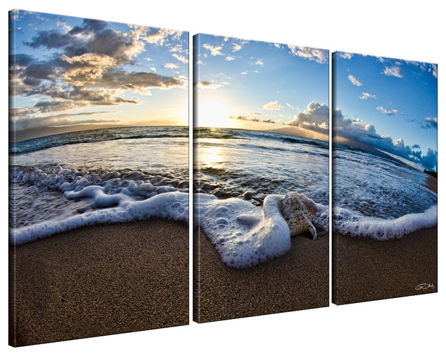 Ready2HangArt Christopher Doherty U0027Sea Star IIu0027 3 Piece Canvas Wall Art  Beach