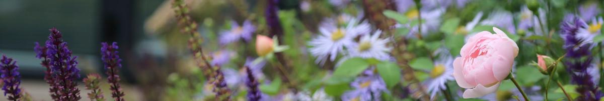 Rosemary coldstream garden design limited st albans for Garden house design ltd