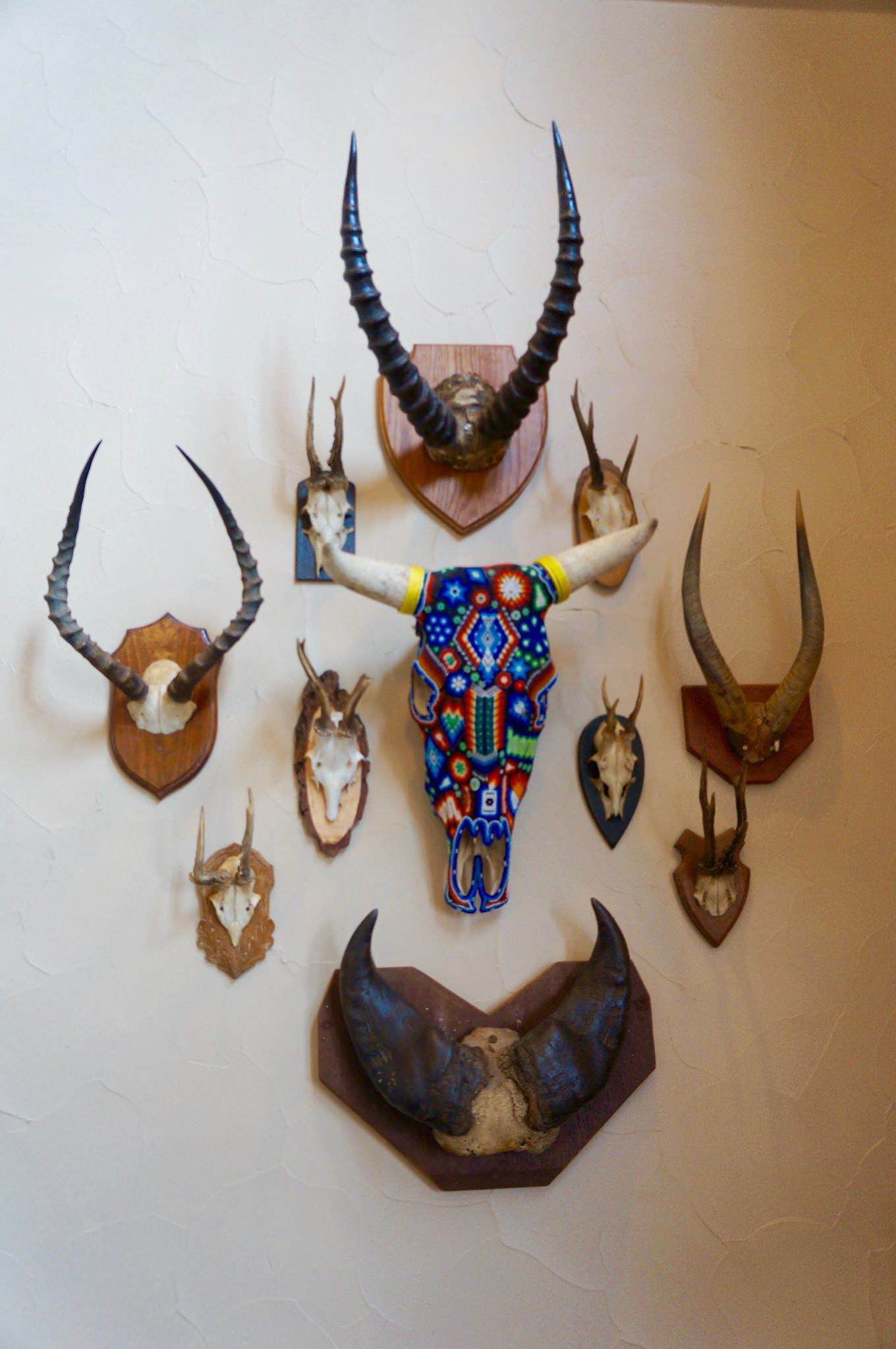 Skull/horn mounts, living area wall