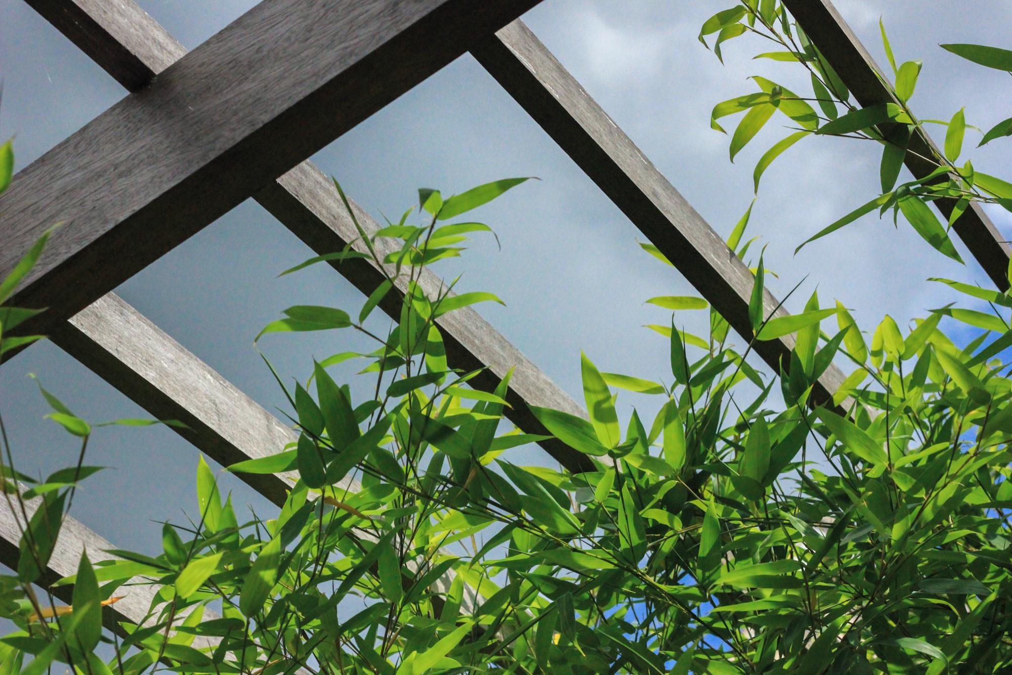 Bamboos and Orange - A Small Contemporary Garden