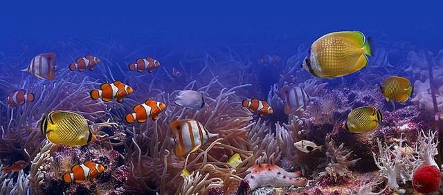 Tropical Fish Panorama Wall Mural Self Adhesive Wallpaper