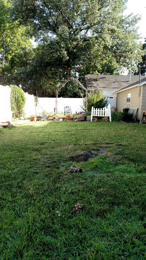 Need Backyard Makeover Advice