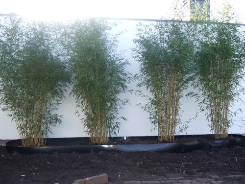 Bambus im Garten - Vorher-Nachher
