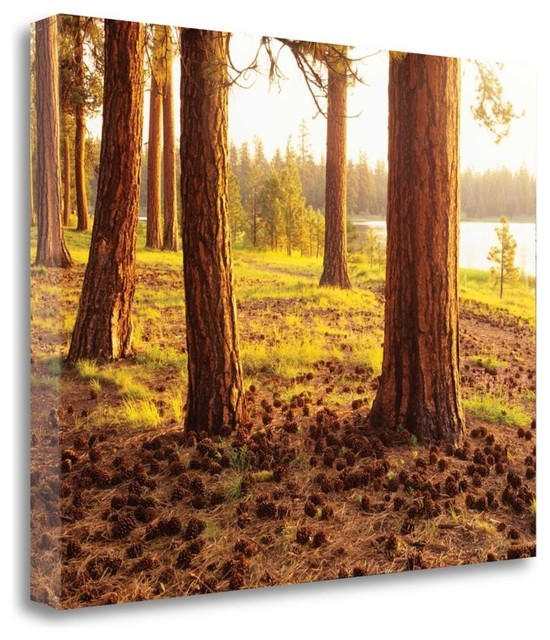 """""""pinecone Woods"""" By Dennis Frates, Gallery Wrap Canvas Art Printed, 26""""x21""""."""