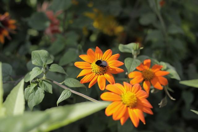 conseils de pro pour attirer les abeilles dans son jardin. Black Bedroom Furniture Sets. Home Design Ideas