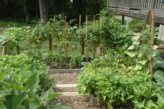 Vegetable Garden on a Slope