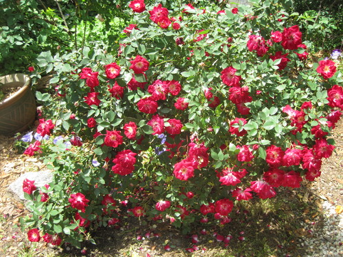 Loss and change in the garden - The garden web forum ...