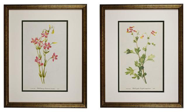 1925 Wildflower Botanical Antique Print