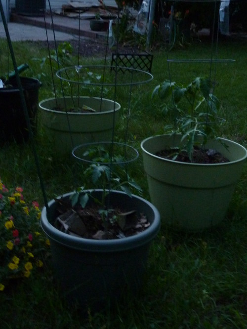 does this pot look big enough for a black cherry tomato and would you say the larger pots are 10 gallon or more
