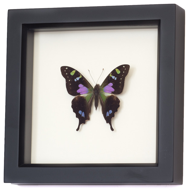 Purple Mountain Swallowtail Framed Butterfly - Contemporary ...