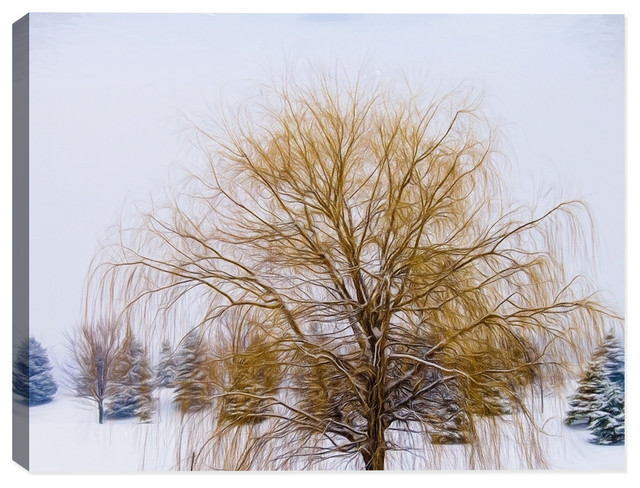 Weeping Willow In Winter Canvas Art Print 30 X24 Fine