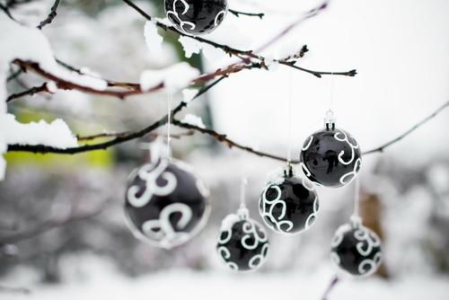 garden in snow time