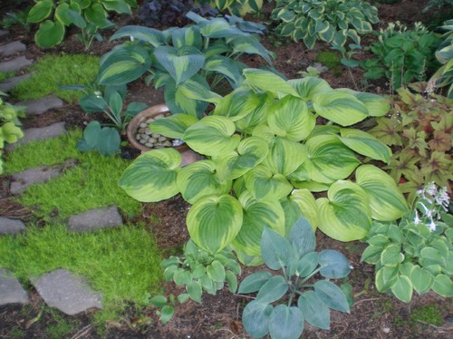 Hosta minis 2016 for Home design 9358