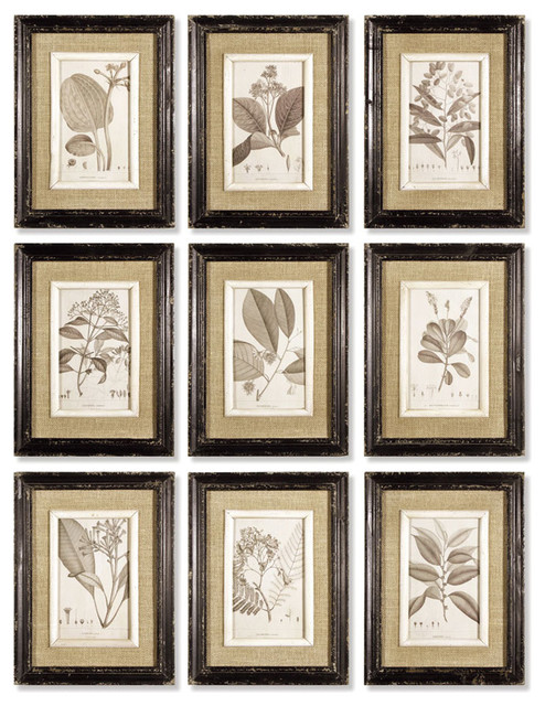 Framed Naturalist Prints Set Of 9 Rustic Prints And