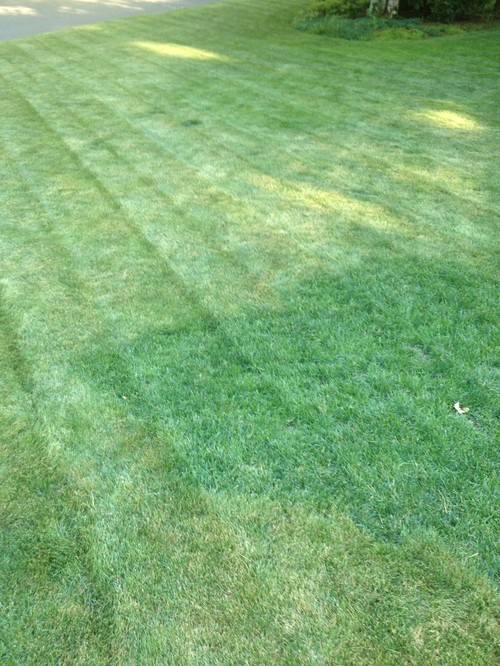 Unique Identifying Grass Types in my Lawn YQ93