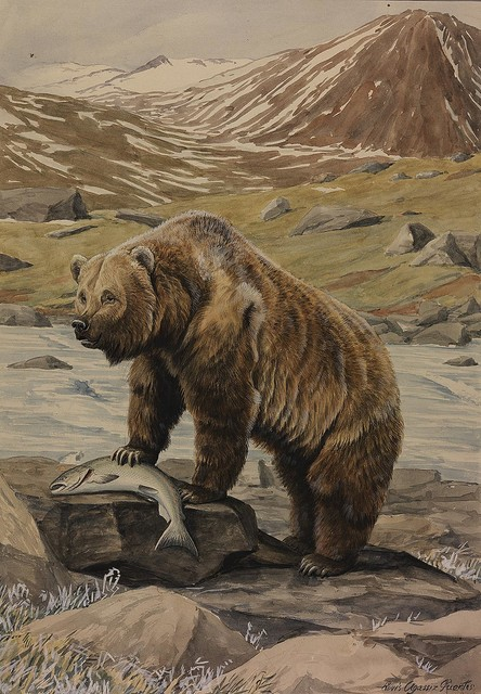 Alaska Brown Bear Wallpaper Wall Mural, Self Adhesive Contemporary Wall  Decals