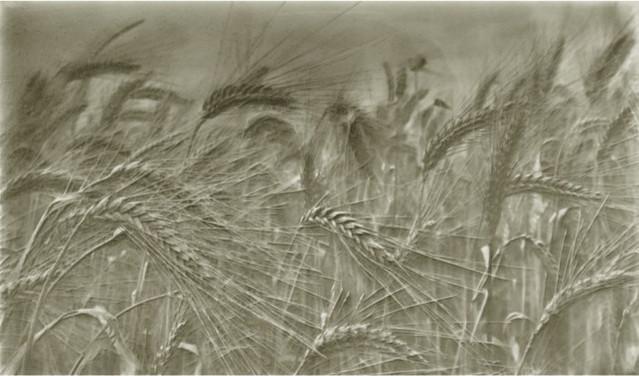 Wheatfield Backsplash Small, Stone Gray