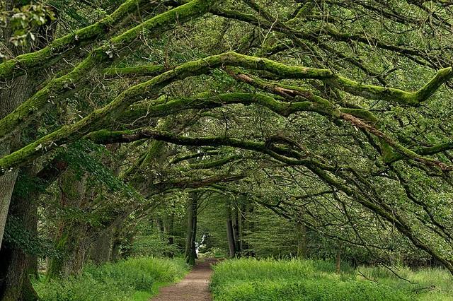 Magic Murals Oak Tree Moss Canopy Wallpaper Wall Mural