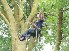 Личный опыт Как я рубил гигантское дерево на участке (14 photos)