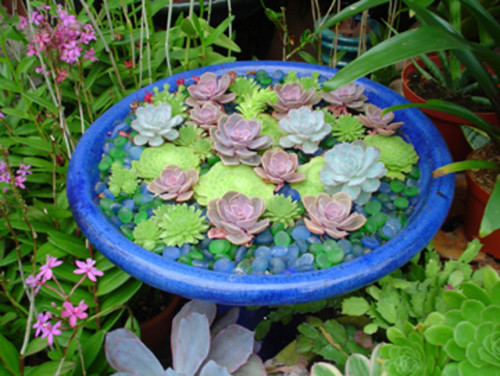 Would Like To Create Multi Color Succulent Dish Garden