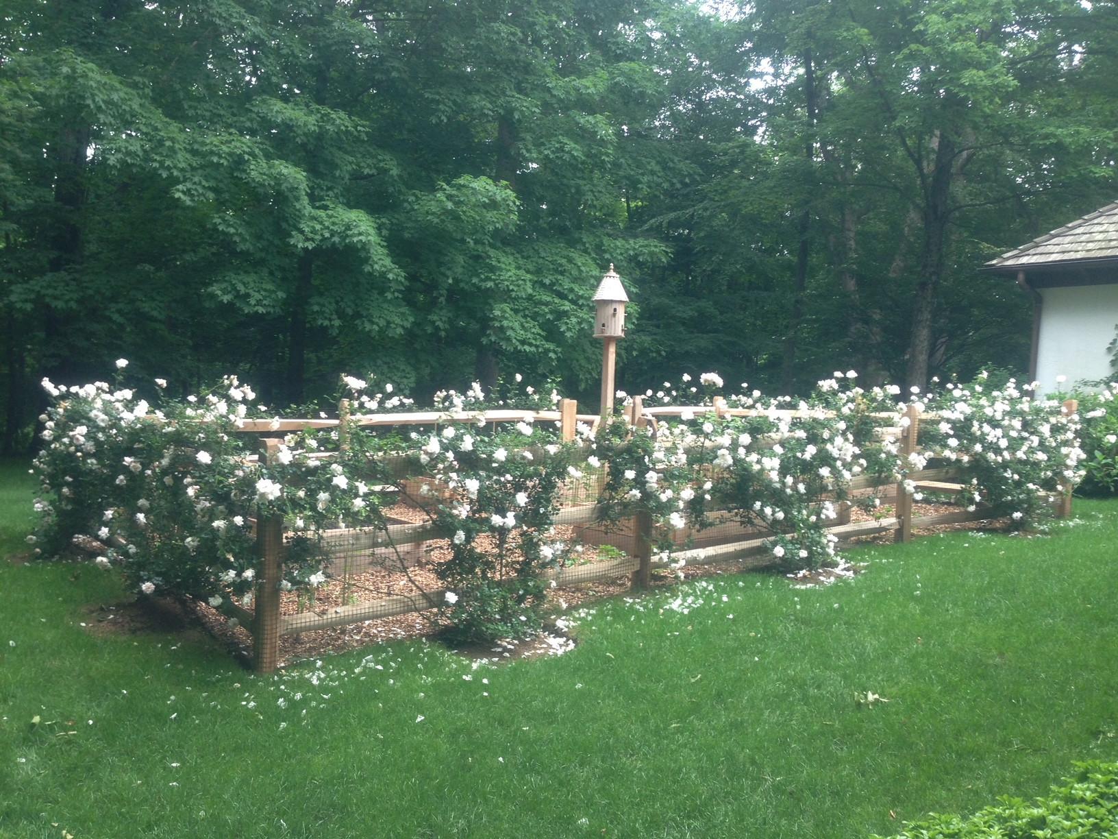 Roses Gardens