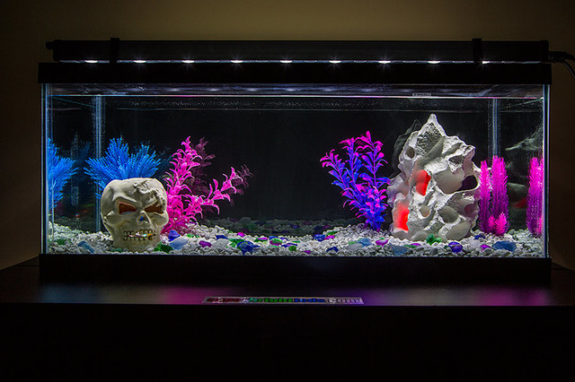LED Aquarium and Fish Tank Lighting family-room & LED Aquarium and Fish Tank Lighting azcodes.com