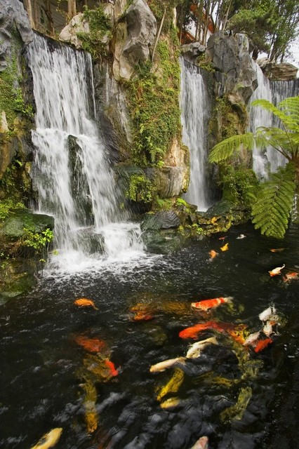 Koi fish pond with waterfalls in a chinese buddhist temple for Chinese koi pond