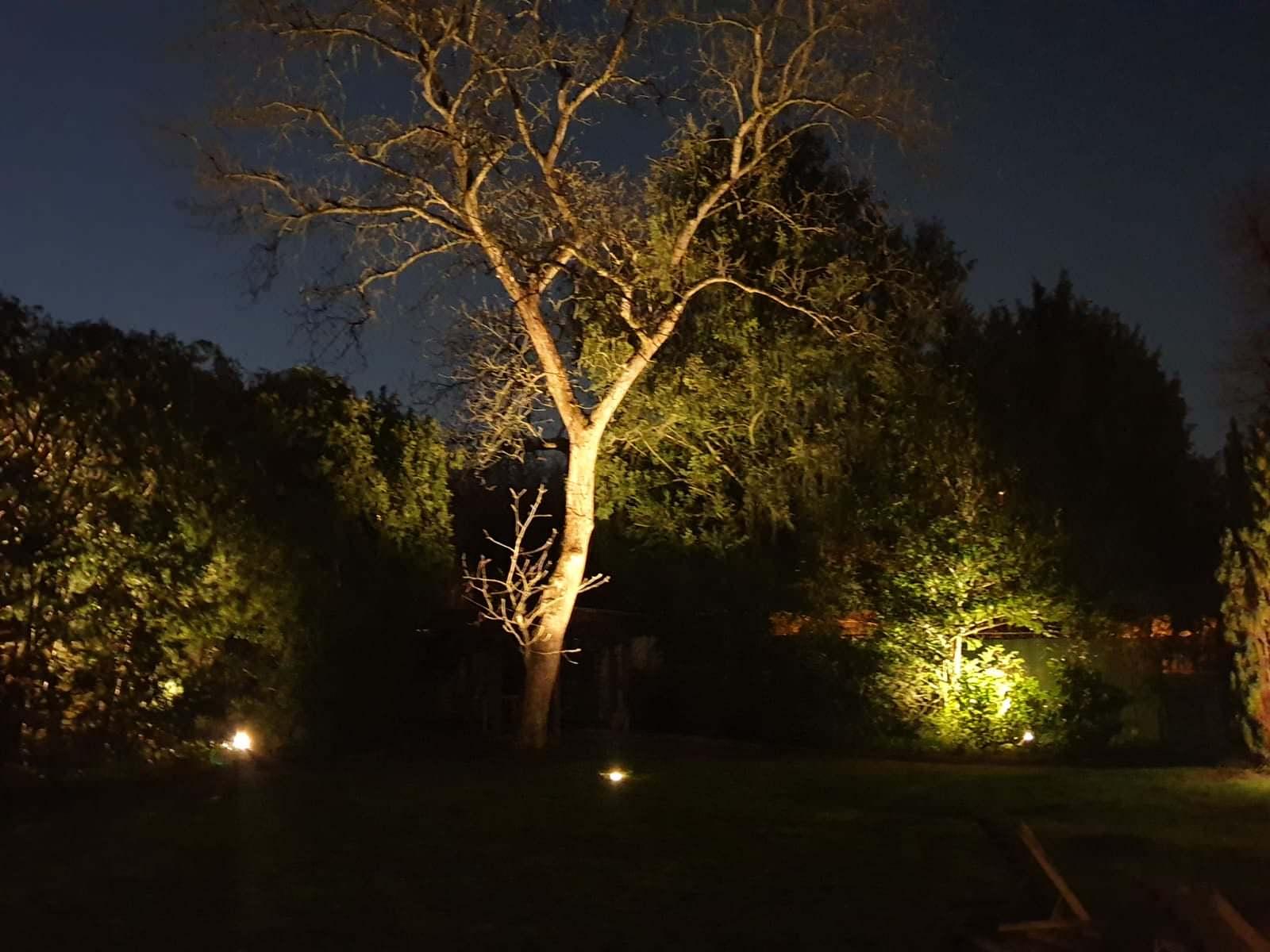 Walnuss Baum mit Beleuchtung