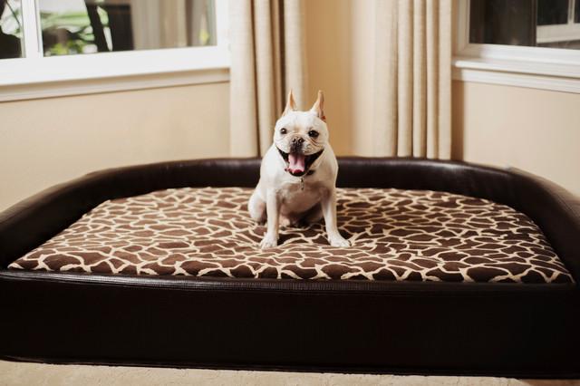High Back Luxury Dog Bed Traditional Orange County