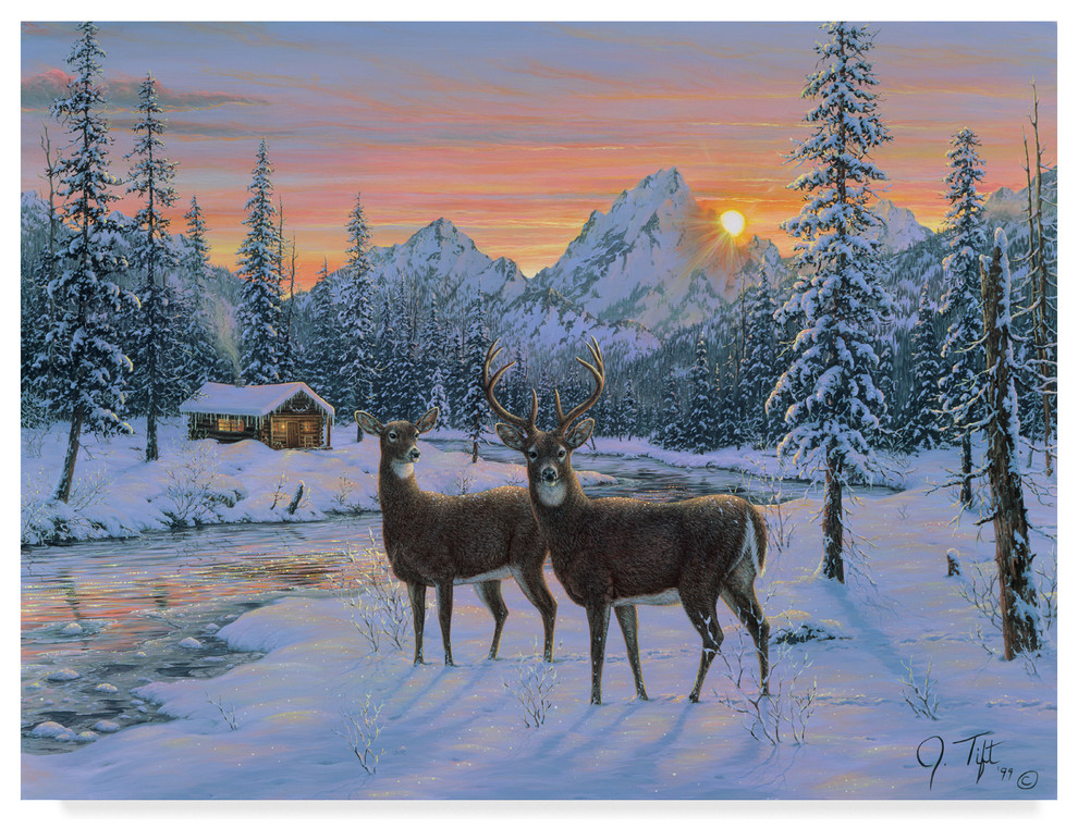 Jeff Tift Whitetail Canvas Art Rustic Prints And Posters By Trademark Global