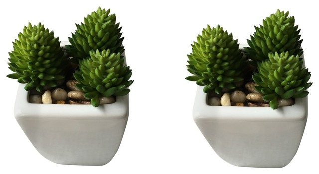Mini Faux Agave Plants In White Ceramic Square Pots Set Of 2 Contemporary Artificial Plants And Trees By Angel Isabella