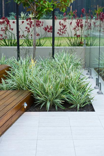 Dalkeith garden contemporary-pool