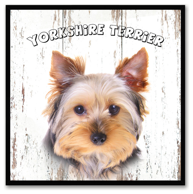 Yorkshire Terrier Dog Canvas Print 7quotx7quot Prints And  : prints and posters from www.houzz.com size 638 x 640 jpeg 132kB