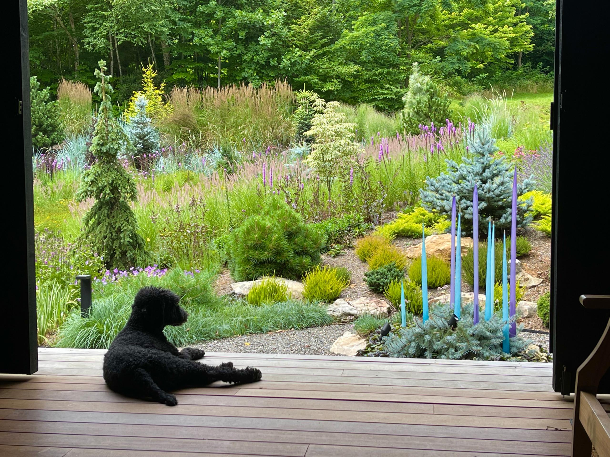 Dog and dogtrot:  Amador surveys the garden.