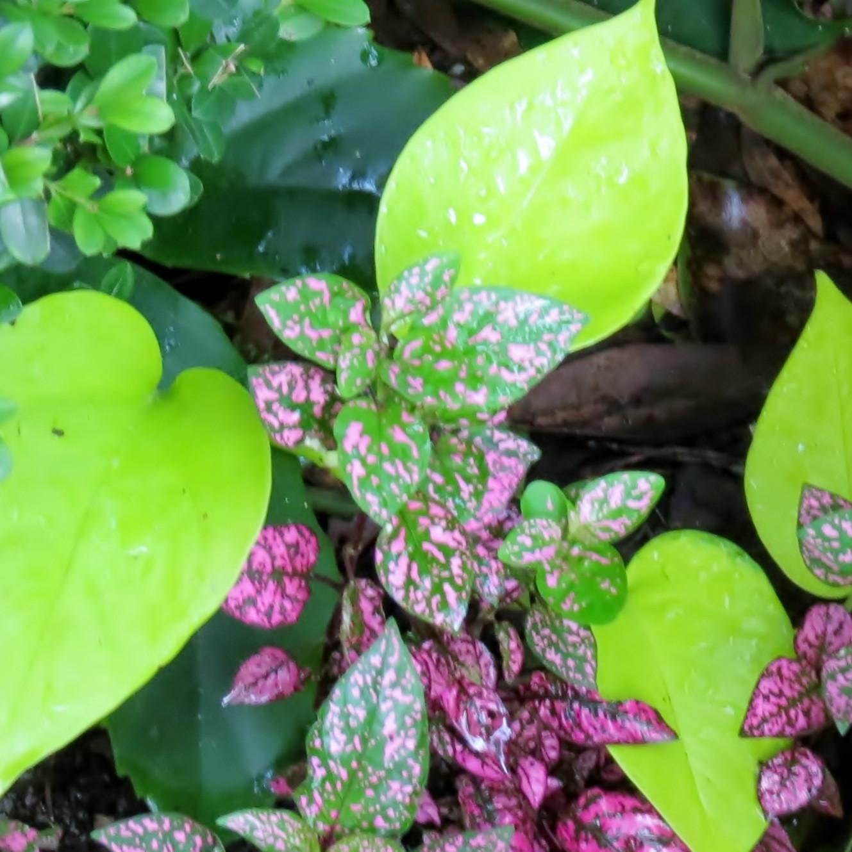 Miscellaneous Garden Gems