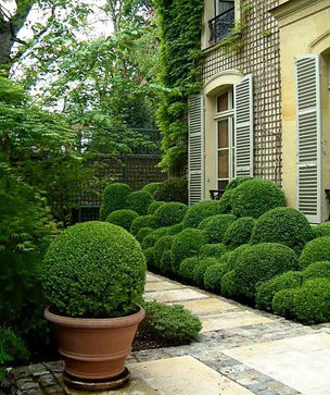boxwood traditional landscape