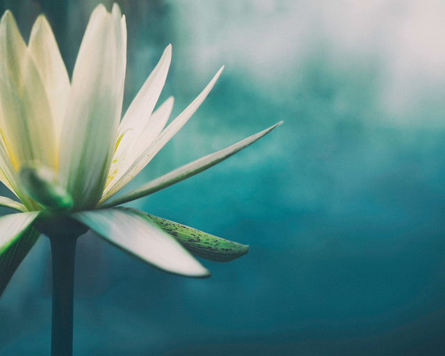 Lily Wall Mural. -1