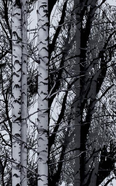 Birch Forest Premium Window Film.