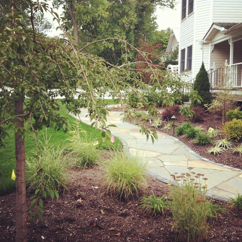 freeform natural bluestone walkway with landscpe