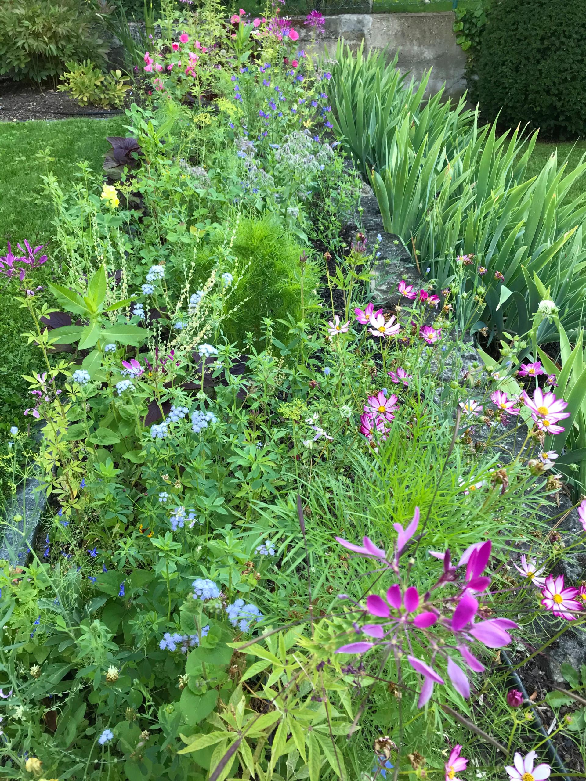 Blumenwiese wild