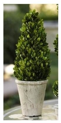 """15"""" Tall Preserved Boxwood Topiary, Cone Shaped"""