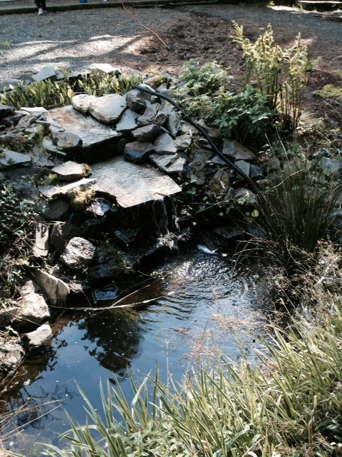 Revamping existing pond bog filter to feed waterfall for Bog filter design