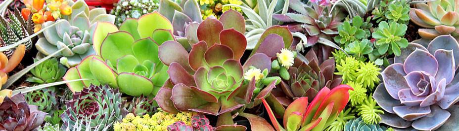 Mountain Crest Gardens - Fort Jones, CA, US 96032