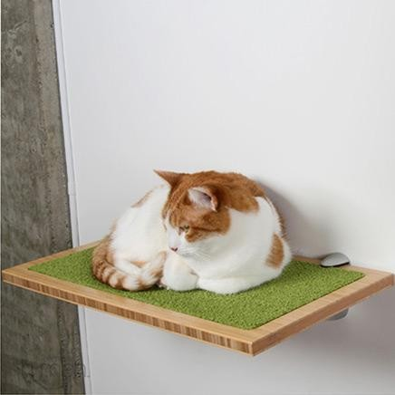 Square Cat Habitat by Buddha