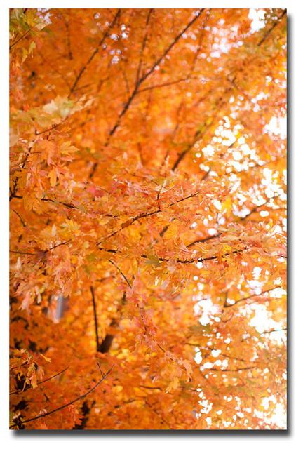 &x27;orange Leaves&x27; Canvas Art By Ariane Moshayedi.