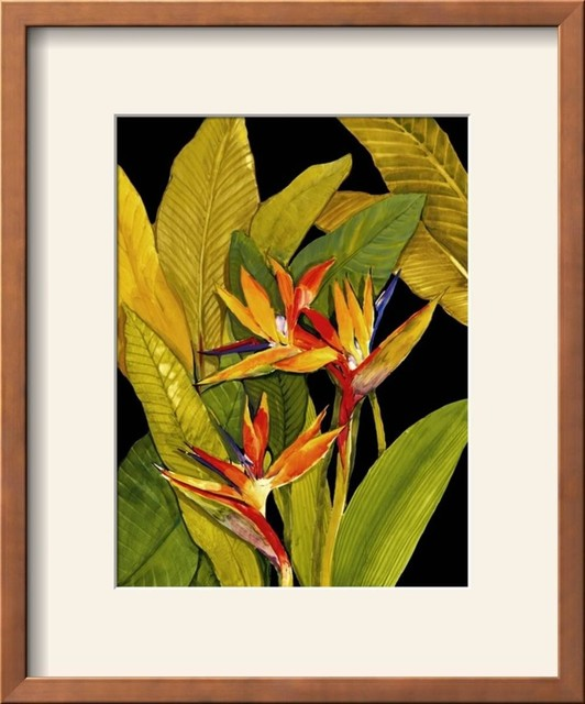 Dramatic Bird Of Paradise Wall Art By Tim O Toole