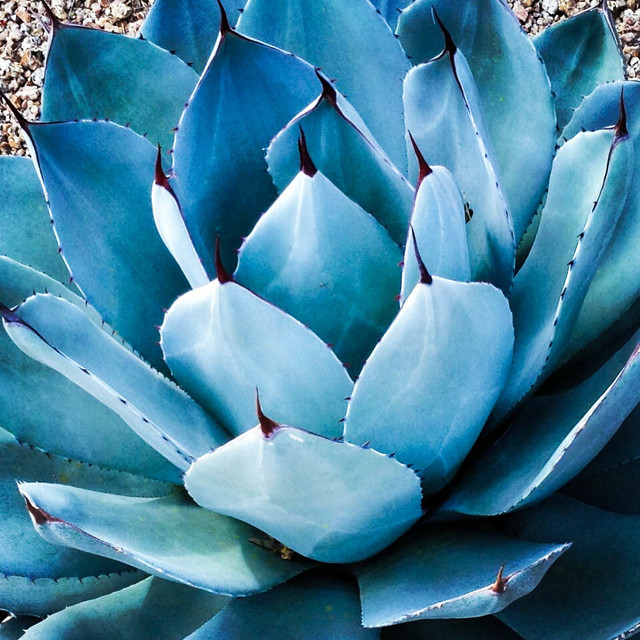 10 Top Plants Native To The Desert Southwest